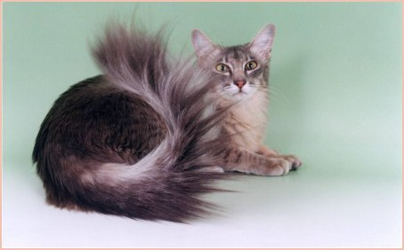Long Hair Cat Picture