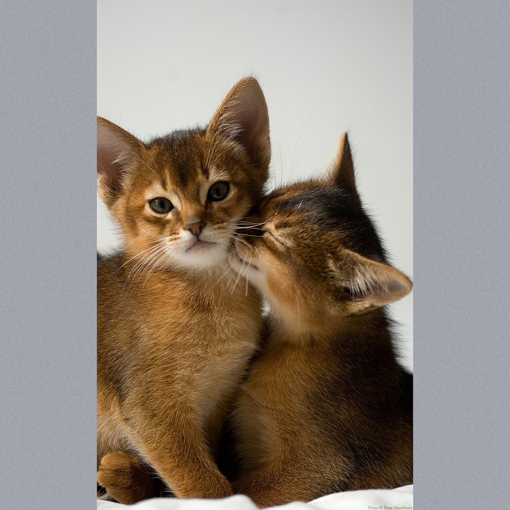 Cat: Information, Health, Pictures & Training Pet Paw