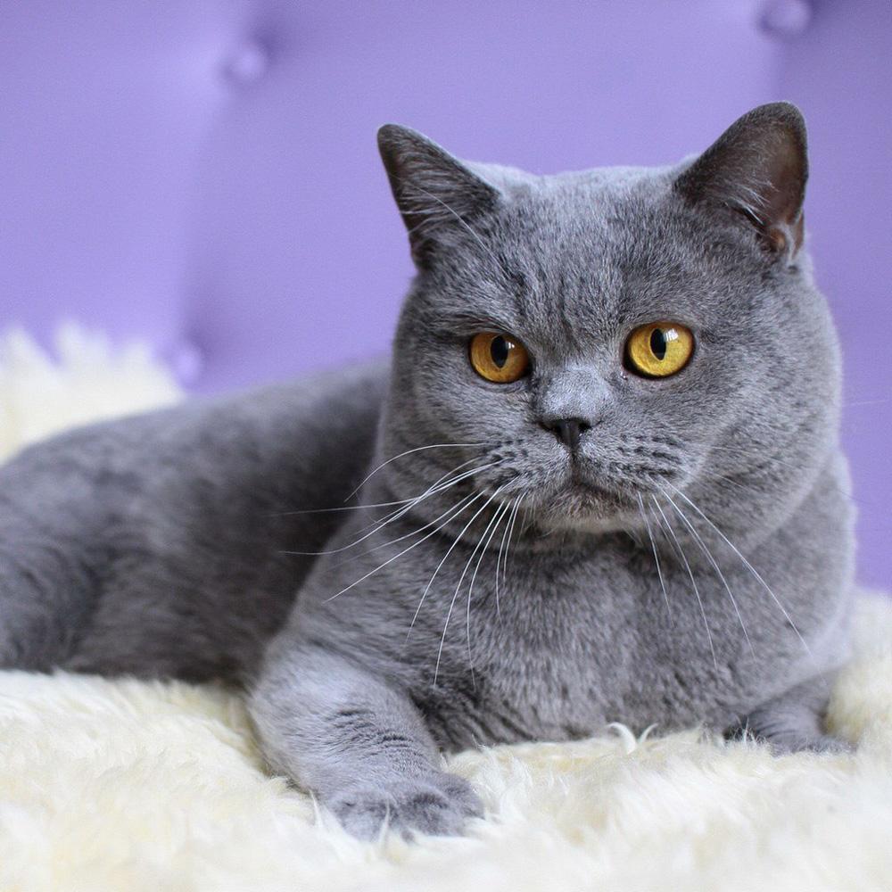 bengal cat rescue ohio