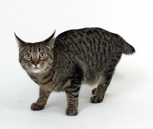 Black Wild Cat Looks Like Housecat