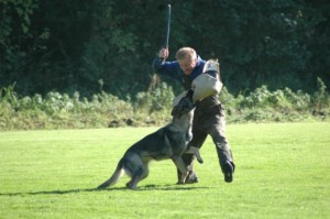 Find Out How Police K-9 Dogs are Trained