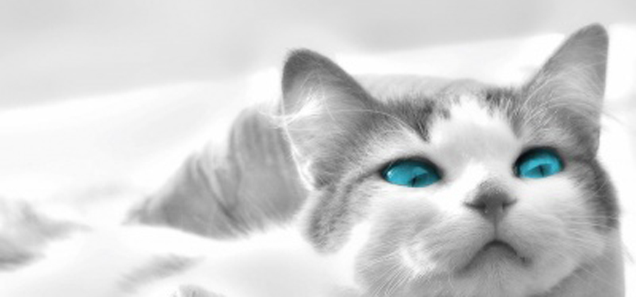 Ojos Azules - Information, Health, Pictures & Training Pet Paw