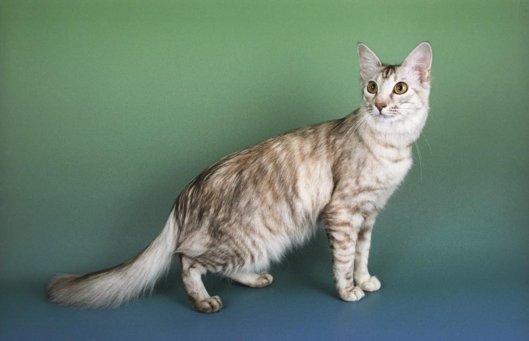 Training Adult Cat 67