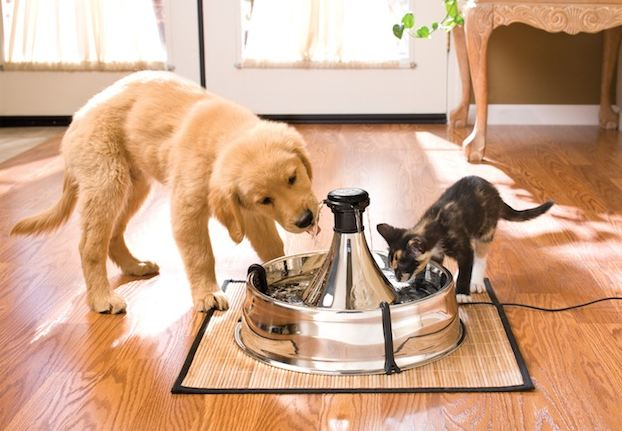 Cats vs Dogs - Which is The Ideal Pet