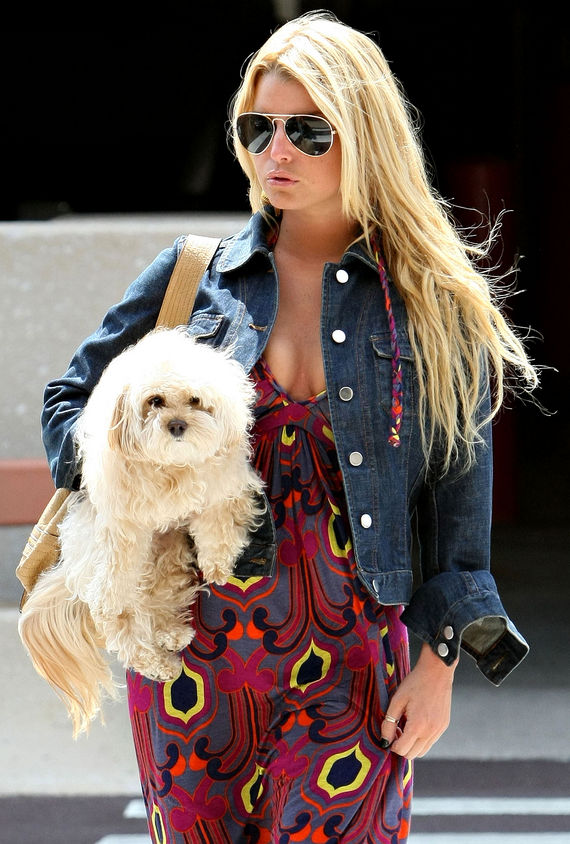 Jessica Simpson Maltese Mross Poodle
