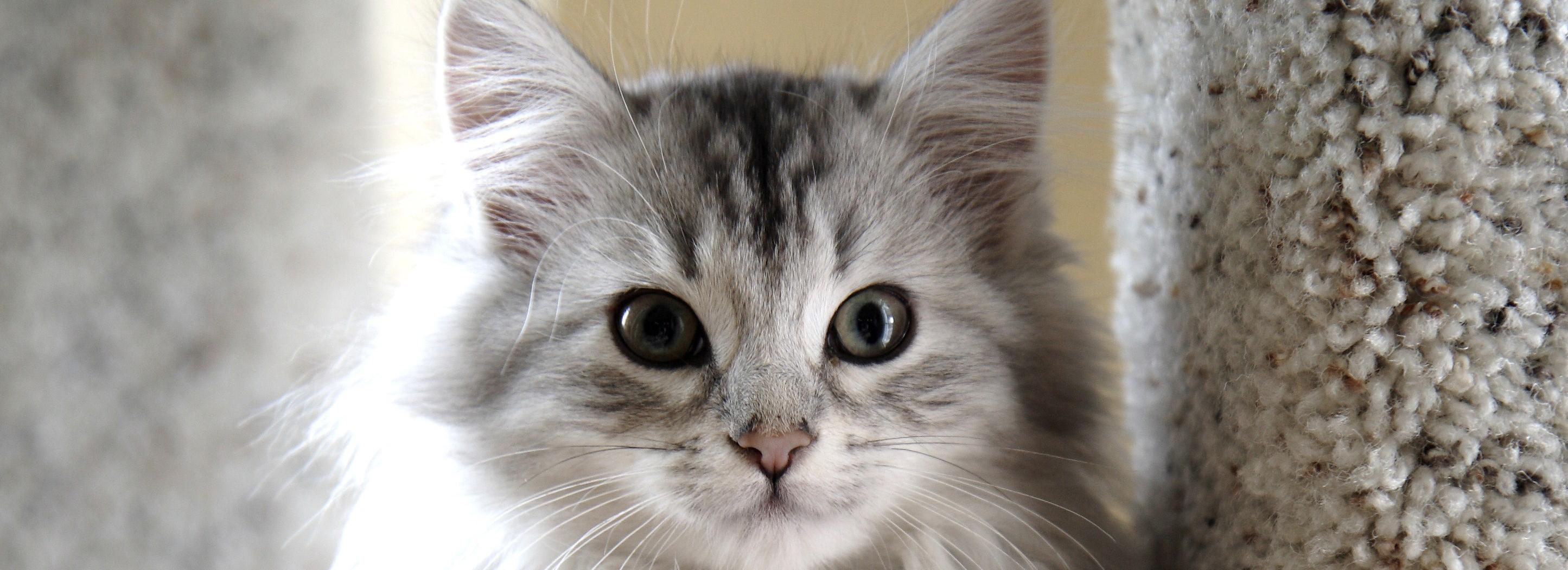 build a feral cat house