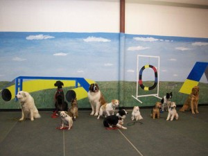 What to look for when choosing Dog School
