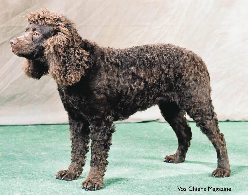 Saint Bernard  Pet Grooming Dog Grooming