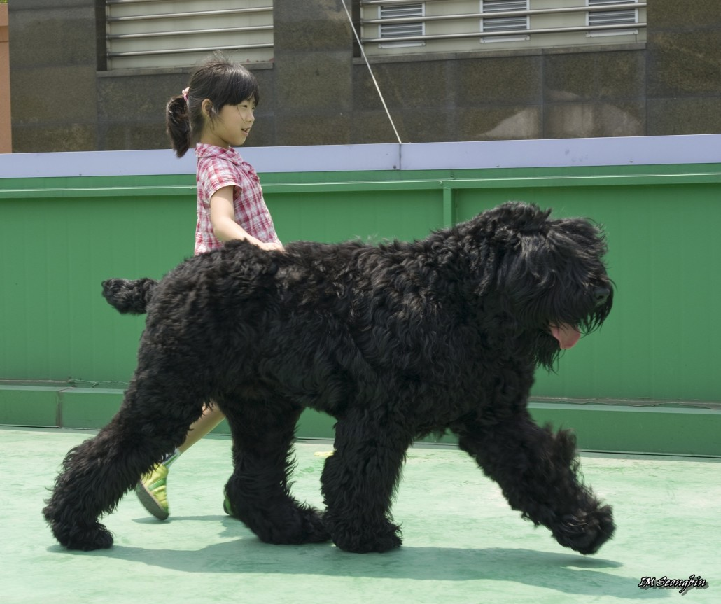 Large Hairy Black And Tan Dog Breed