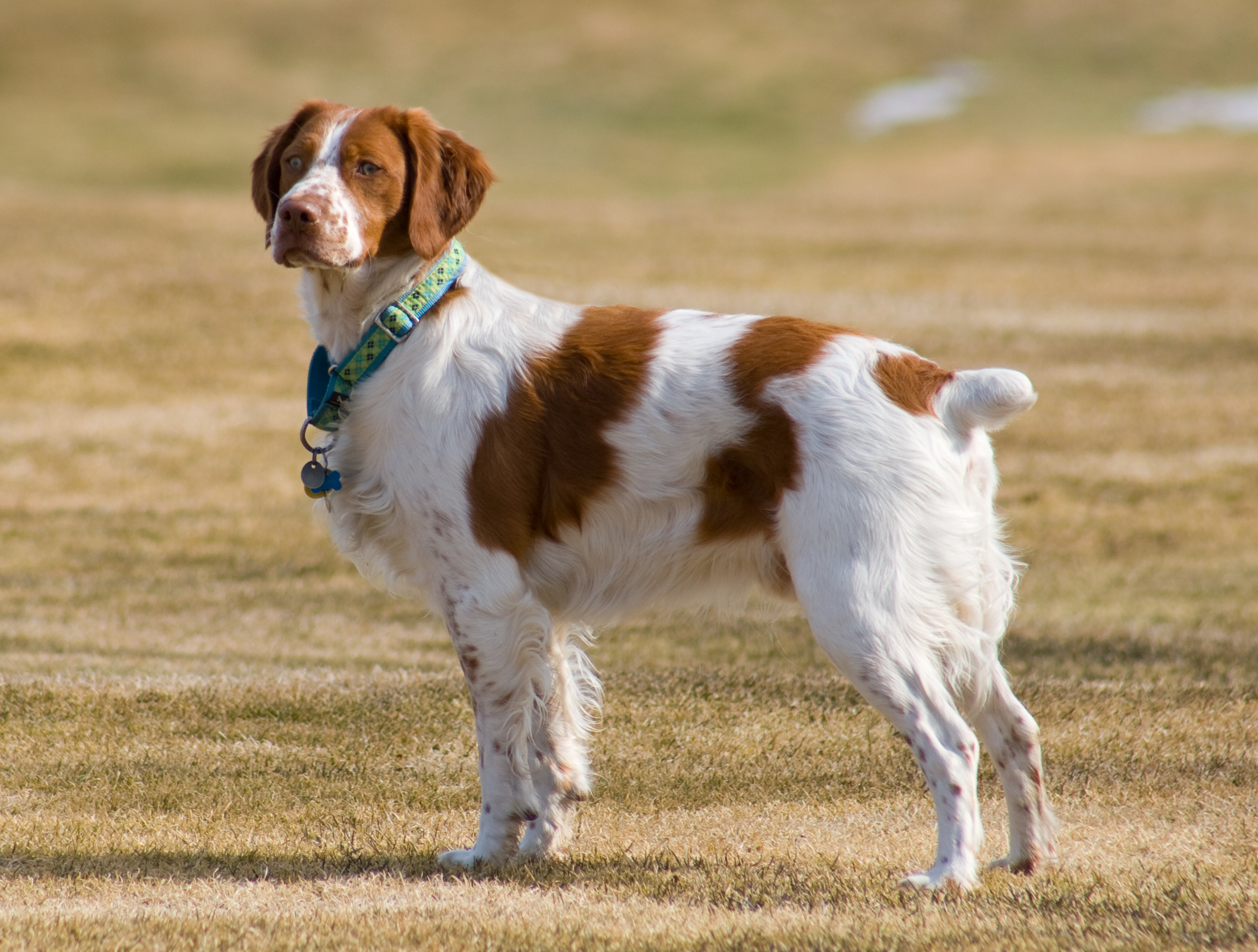 dog breed guide with pictures