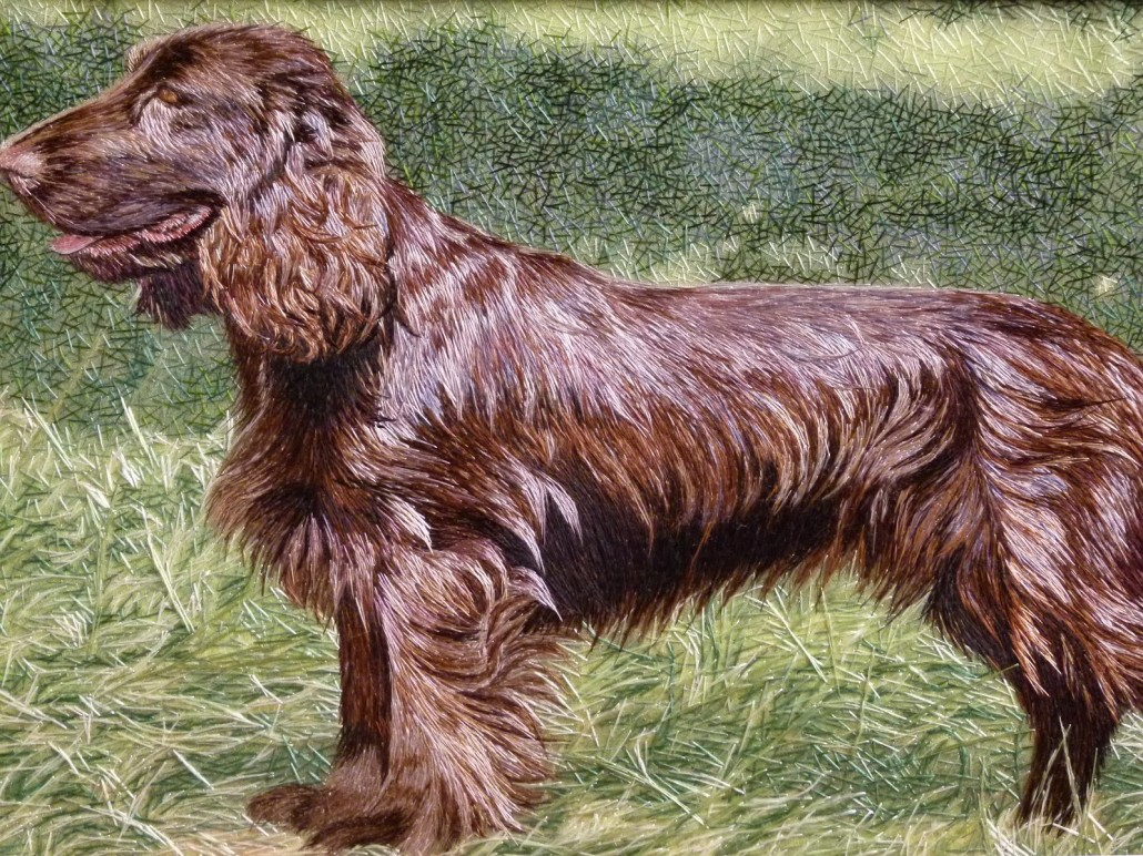 Field Spaniel Breed Guide Learn About The Field Spaniel