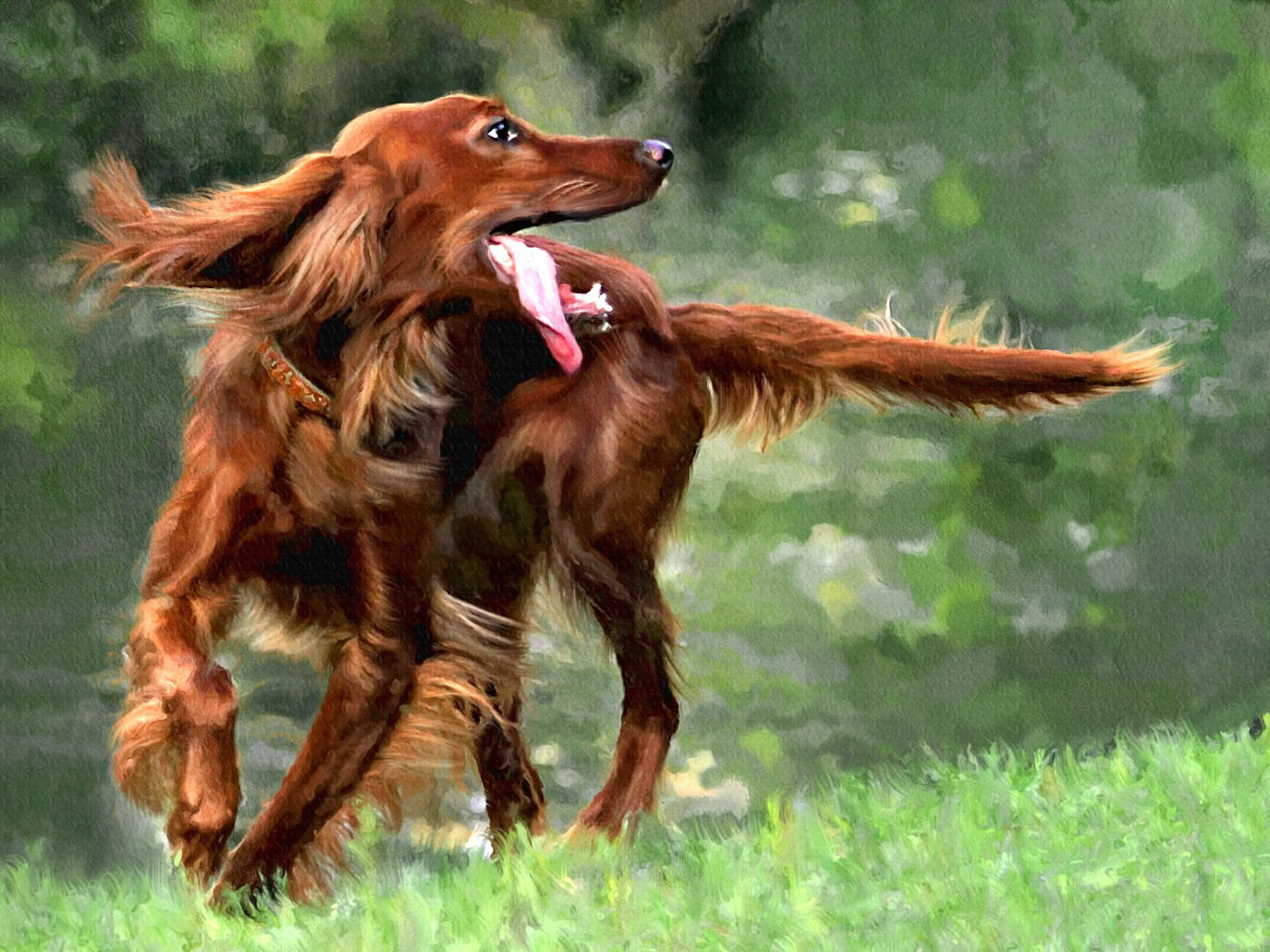 Irish Setter Breed Guide Learn About The Irish Setter