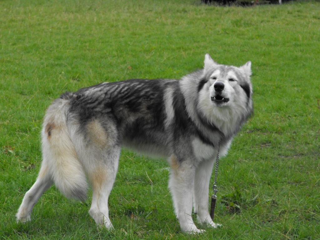 Dog Breeds That Look Like Toys