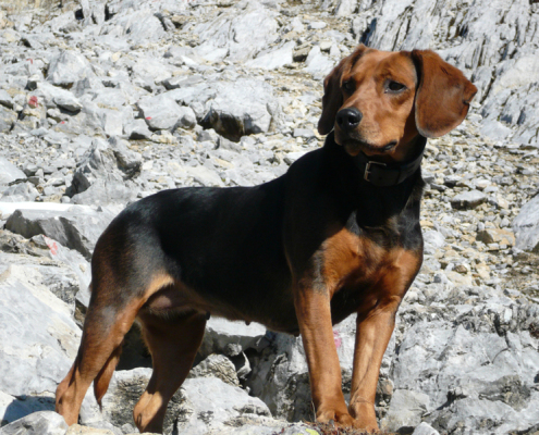 easy to train dog breeds pet paw