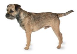 Hypo Allergenic Dog Breeds Pet Paw