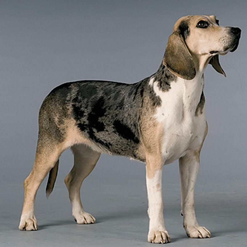 Dogs For Rescue Ohio