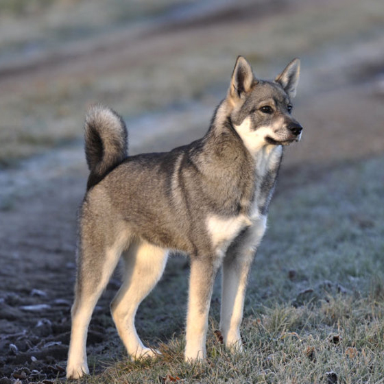J 228 Mthund Breed Guide Learn About The J 228 Mthund