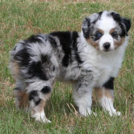 Small Dog Breeds For Children