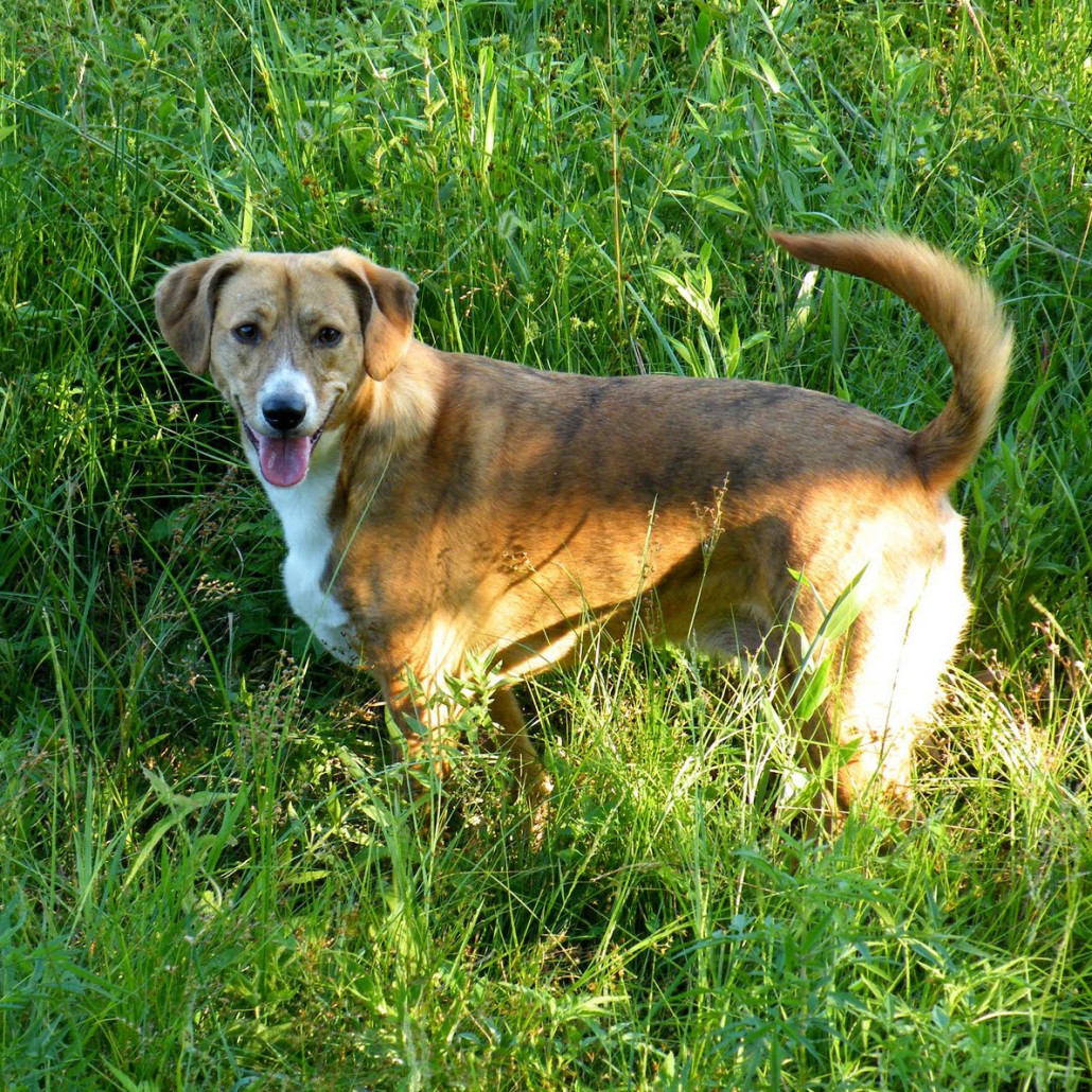 Learn About The Mountain Cur