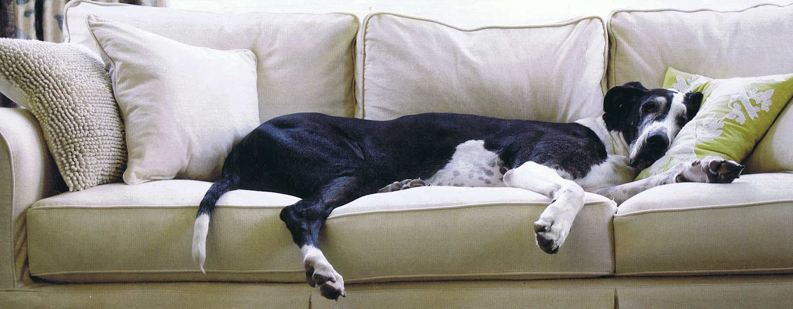 Great Dane on the Couch
